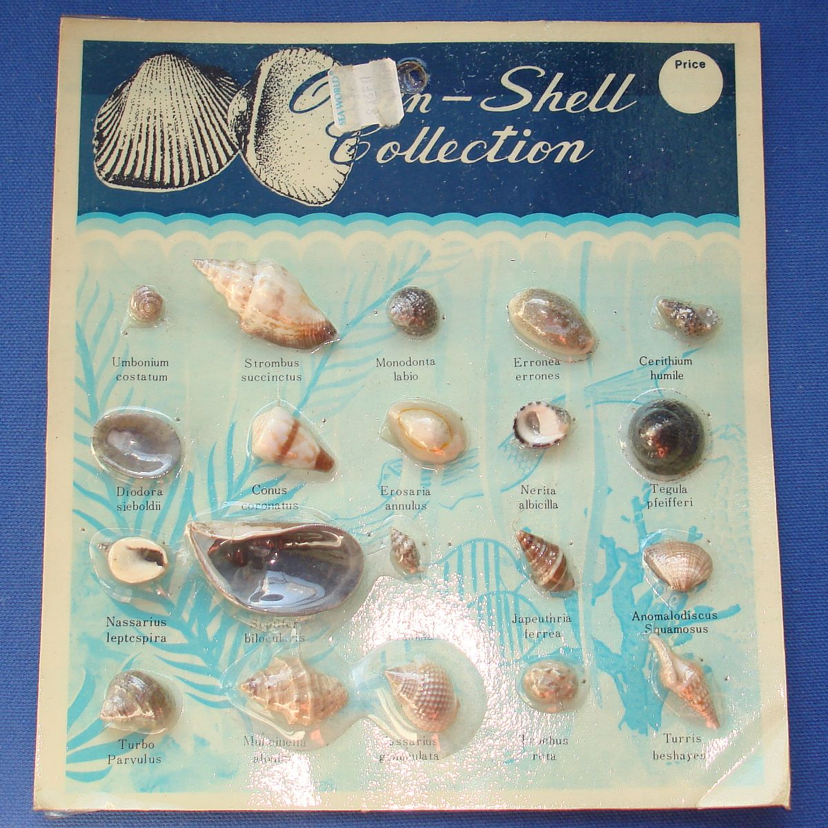 Vintage Ocean Shell Collection Made In Taiwan Sea World Factory Sealed Card