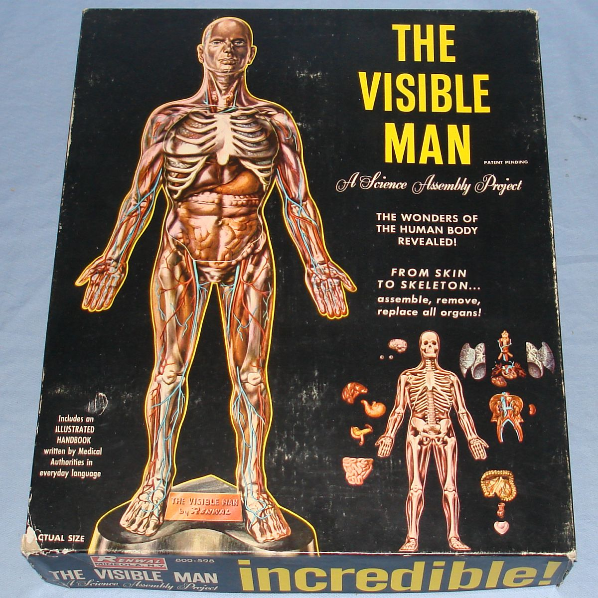 Vintage Renwal The Visible Man Anatomically Accurate Model Kit #800 Box Lid
