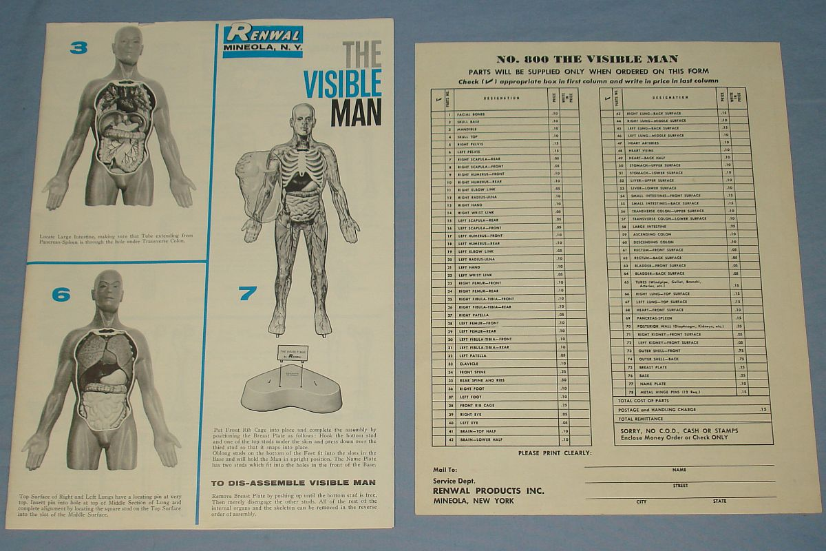 Vintage Renwal The Visible Man Anatomically Accurate Model Kit #800 Parts Instructions